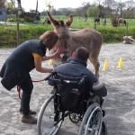 Visite MAS de Paimpol à l'asinerie des Ânes de Min Guen - Médiation animale