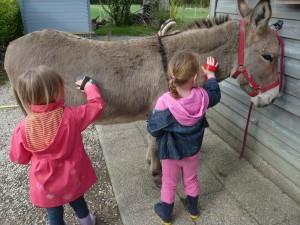 Vacances d'enfants à la ferme bretagne - Les ânes de Min Guen