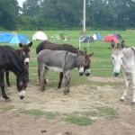 Mini-camp en bretagne à la ferme