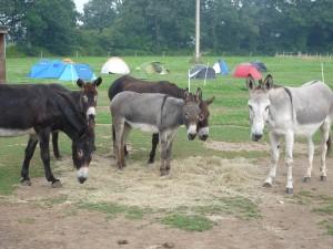 accueil de mini camps en Bretagne