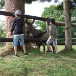 Le mois de juillet à la Ferme de Min Guen en bretagne dans les côtes d'armor - nourrir les ânes