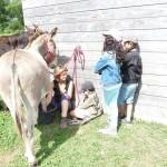 Le mois de juillet à la Ferme de Min Guen en bretagne dans les côtes d'armor - soin des ânes